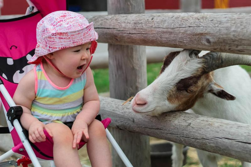LoveNG Category: Runner Up - Child & Goat- by Kameron Payeur